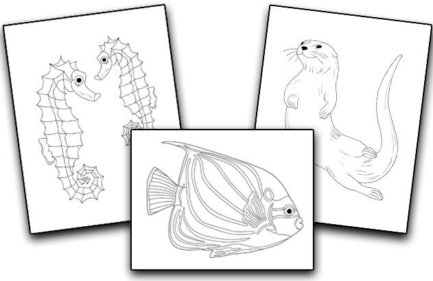 what-is-Aquatic-Animals-Coloring-Pack